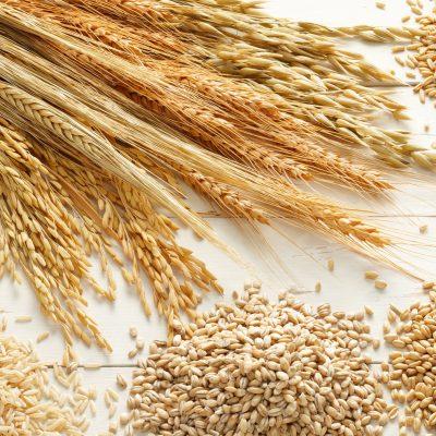 Grain & Flour